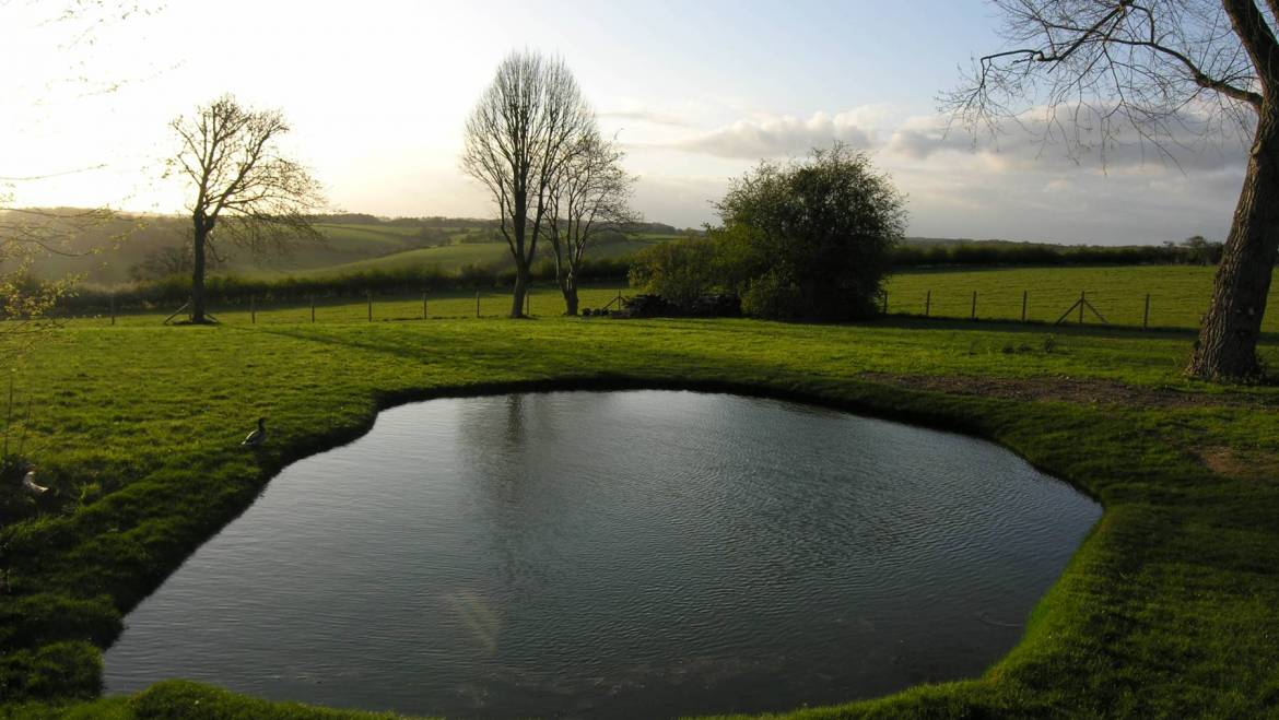 A simple natural pond